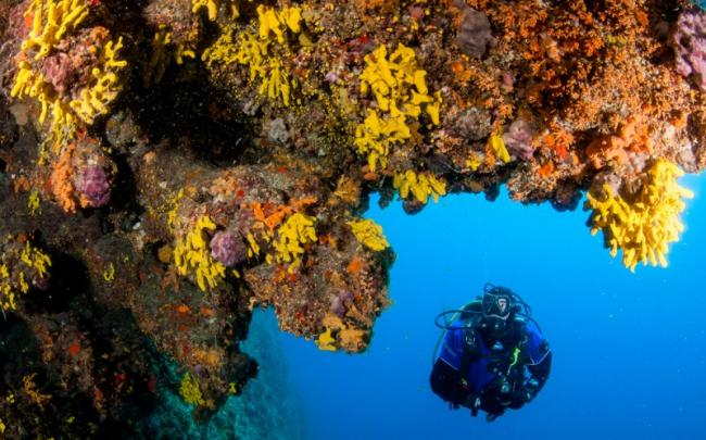 38. Dive trips in the autumn